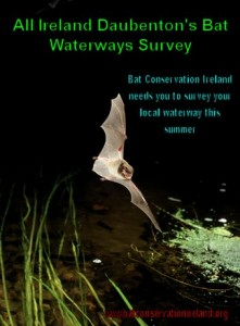 bat survey